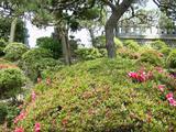 [Photos]   Photos de mes voyages à Tôkyô. Th_78507_PIC_0087_122_856lo